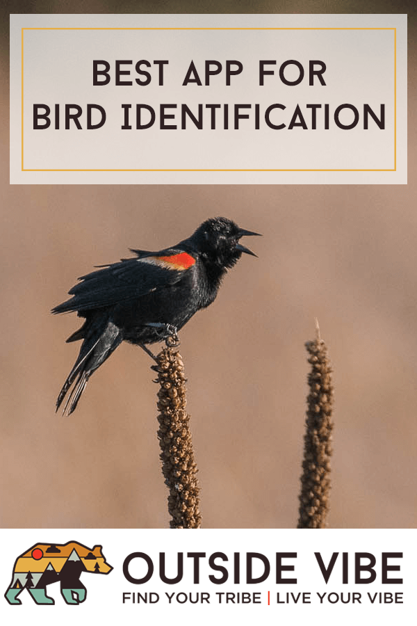 Best App for Bird ID - Red-winged Blackbird